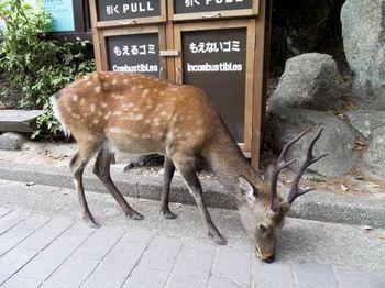 鹿.1_1.jpg